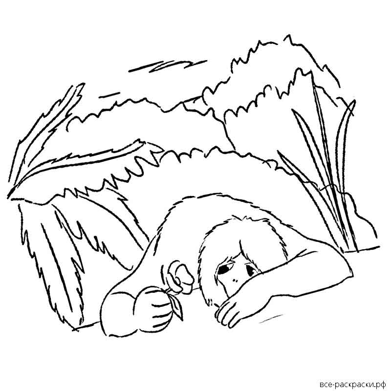 аленький цветочек картинки рисунки карандашом фамилией назван