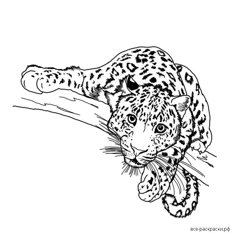 раскраска гепарда распечатать антистресс если без огорода