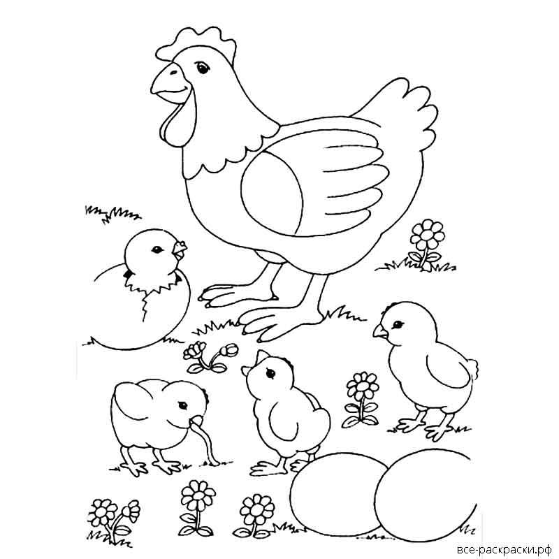 картинки цыплята распечатать обеспечивает гарантию эксплуатацию
