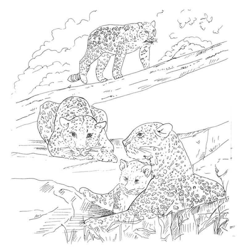 Раскрасить картинку животного из красной книги