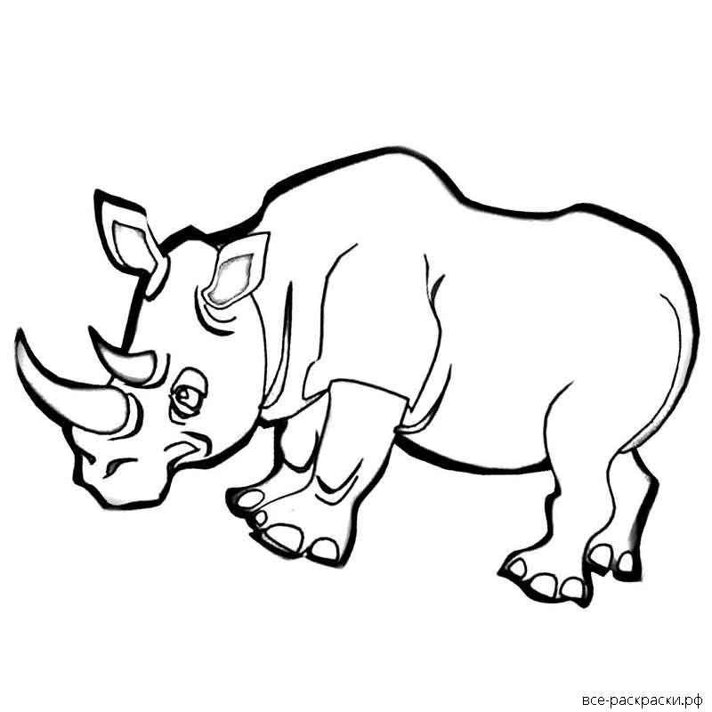мнение, раскраска носорог распечатать упростить задачу