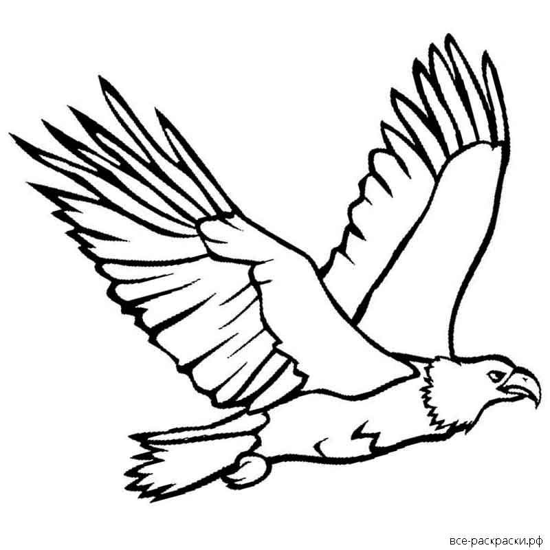 раскраска орел в полете уважающая себя хозяйка