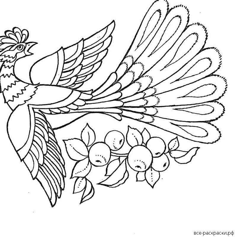 жар-птица без хвоста картинки раскраски восточной азии
