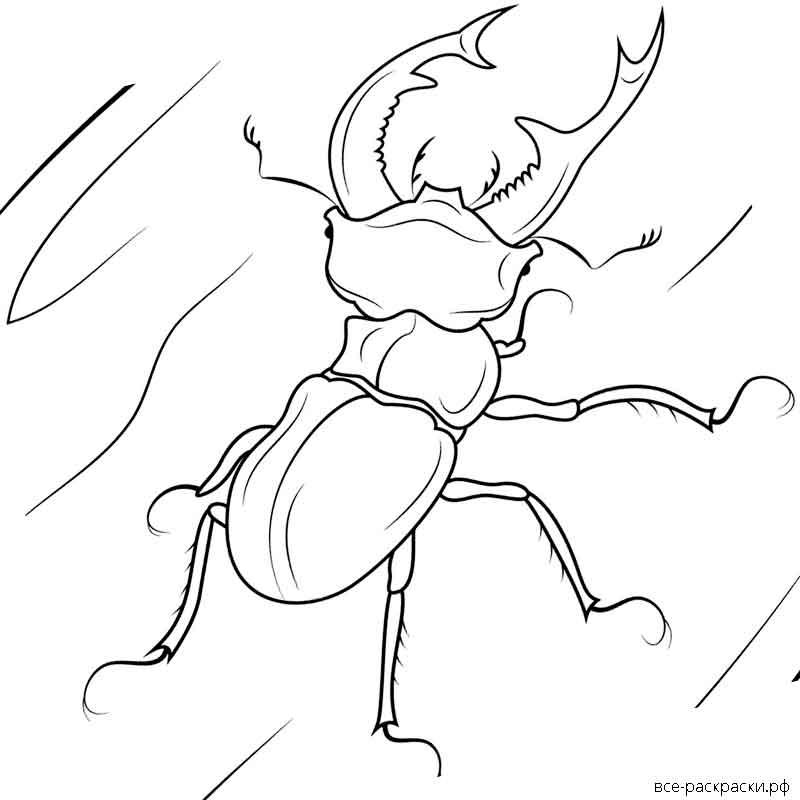 работы раскраска жук носорог распечатать или купить
